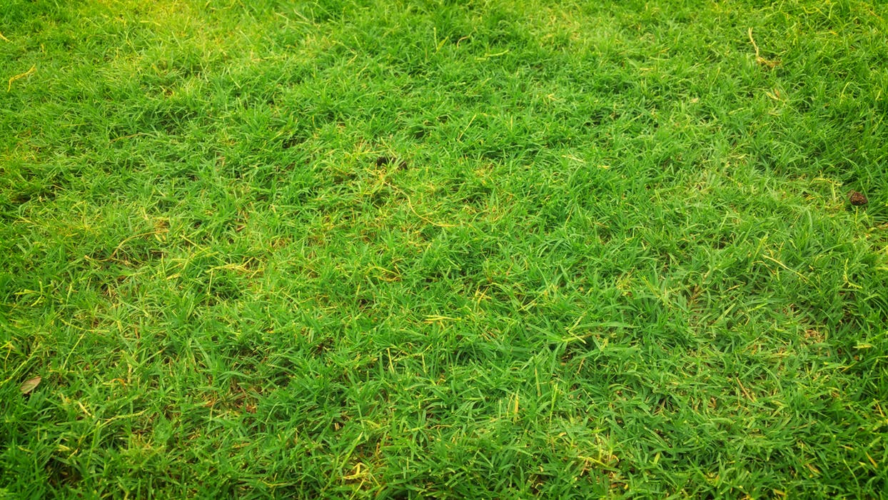 close up view of an artificial turf Sydney product